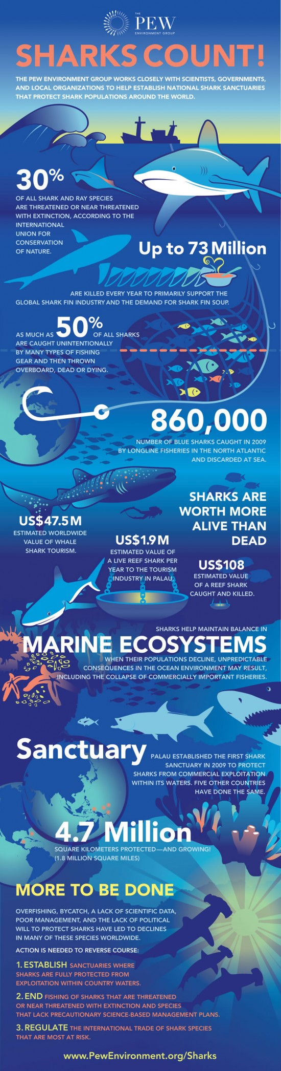 shrk-sharks-count-infographic_final-550x2092