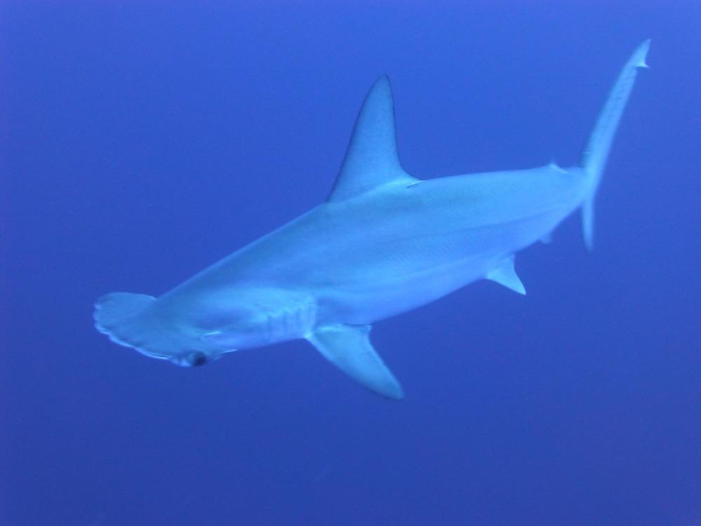 sharks-266014