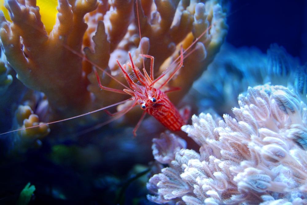 coral-2675697.jpg